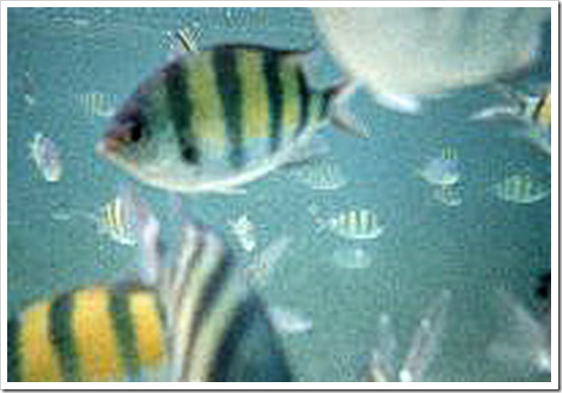 fish-10a_edited-1