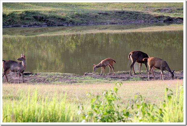 カオヤイ国立公園1日ツアー