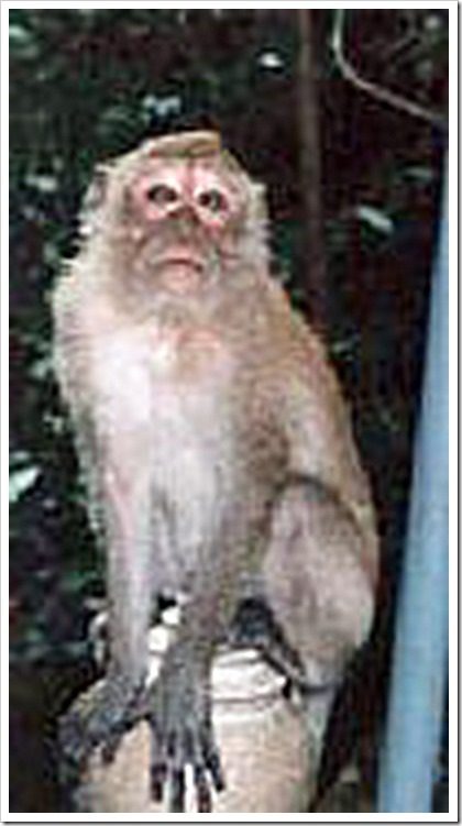 monkey-10a_edited-1